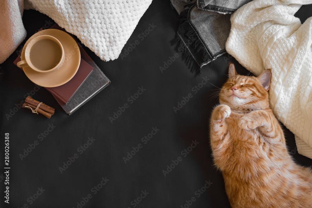 Fototapety, obrazy: Ginger cat sleeping