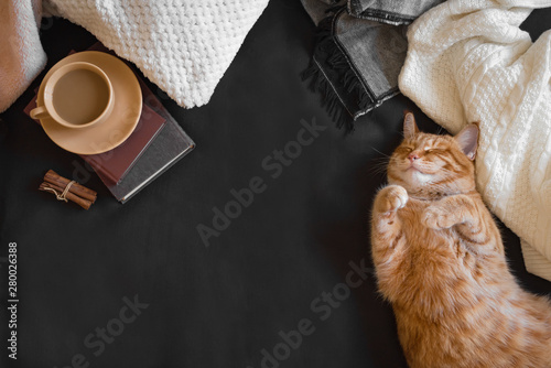 Poster Pays d Asie Ginger cat sleeping