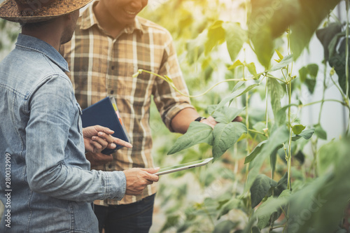 Fototapeta smart farmer using technology in an agriculture field ;man checking by using tablet in farm field obraz