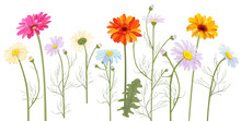 Horizontal Set Chamomile (Daisy), Gerbera, White, Red, Orange Flowers, Buds, Leaves, Stems, Panoramic View. Realistic Botanical Illustration On White Background In Watercolor Style For Design, Vector