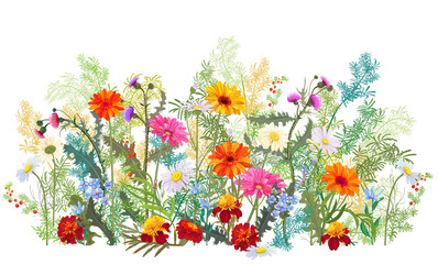 Fototapeta Łąka Horizontal autumn's border: marigold, thistles, gerbera, daisy flowers, small green twigs, red berries on white background. Digital draw, illustration in watercolor style, panoramic view, vector