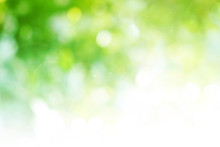 Green Background For People Wh...