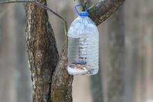 Forest Plastic Bird Feeder. Bi...