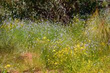 Abundance Of Wild Flowersin Bu...