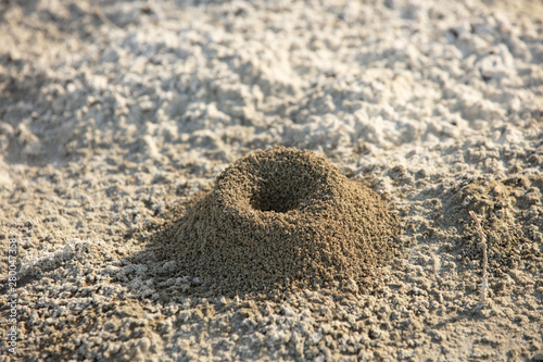 a small anthill on the sand in the desert of sand Canvas Print