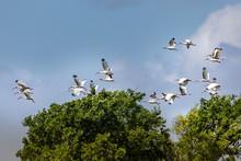 Flock Of Birds Over The Marsh ...