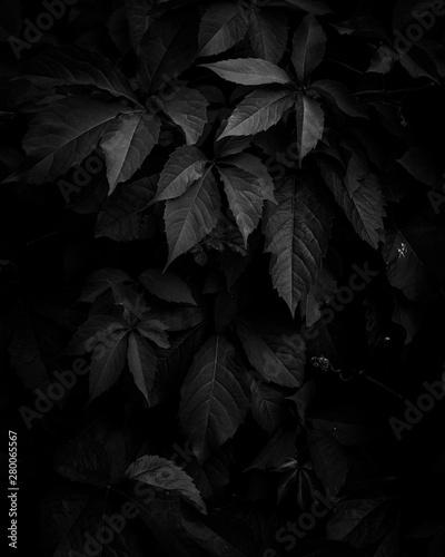 Fototapety, obrazy: Schwarze Blätter im Abendlicht