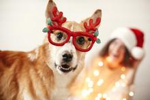Cute Golden Dog In Festive Rei...