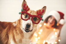 Cute Golden Dog In Festive Reindeer Glasses With Antlers Looking With Funny Emotions On Background Of Smiling Girl In Santa Hat And Christmas Lights. Merry Christmas. Happy Holidays.