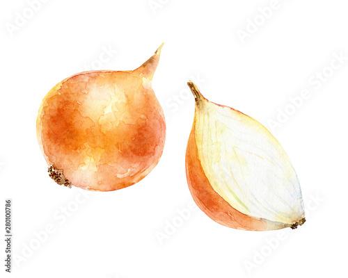 Fototapeta Watercolor onion on white background obraz