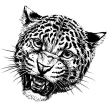 Growling Leopard. Graphic, Hand-drawn Portrait Of A Snarling Leopard On A White Background.