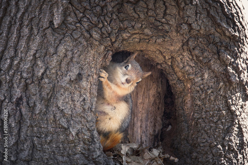 Spoed Foto op Canvas Eekhoorn Squirrel's salute / Istanbul / TURKEY