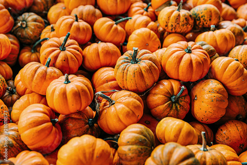 Large Piles Scattering of Orange small Pumpkins and Gourds at a Pumpkin Patch in Fotobehang