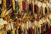 Hanging Dried Corn At A Pumpkin Patch Farmer's Market In The Autumn In October. This Is Used For Fall Decoration.