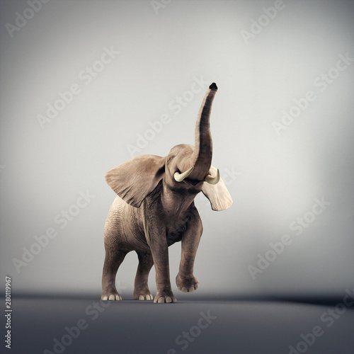 Photo  Elephant studio