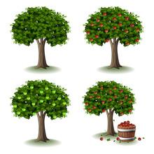 Apple Tree Illustration Collec...