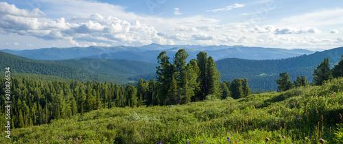 Panorama Forest Landscape Slika na platnu