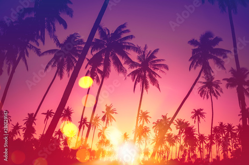 Fotobehang Snoeien Tropical palm tree with colorful bokeh sun light on sunset sky cloud abstract background.