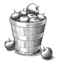 Apple In Basket Hand Drawing Vintage Style Black And White Clip Art Isolated On White Background