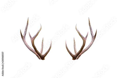 Tablou Canvas Beautiful male antler isolated on white background