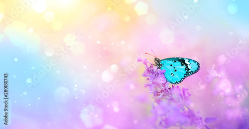 Fotografie, Obraz  gentle spring or summer landscape with lilac flowers and butterfly on blurred abstract background