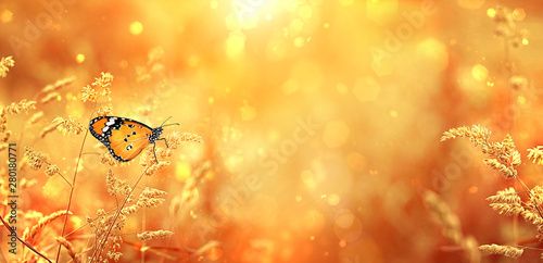 Foto auf Leinwand Orange Beautiful orange butterfly on golden field meadow grass, in sunset rays, nature summer landscape, close up macro. gentle pastoral rural artistic image. summer autumn season. copy space. soft focus