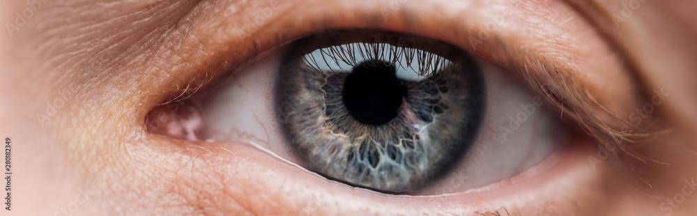 Fototapeta close up view of human blue eye looking at camera, panoramic shot