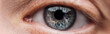 close up view of human blue eye looking at camera, panoramic shot