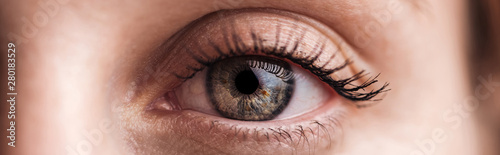 Photo sur Aluminium Macro photographie close up view of human grey eye looking at camera, panoramic shot