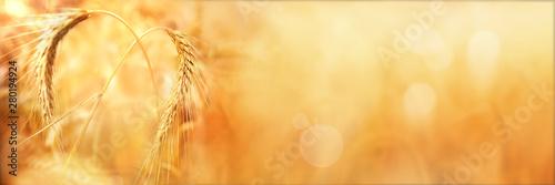 Fototapeta  Golden wheat ears in autumn with bokeh