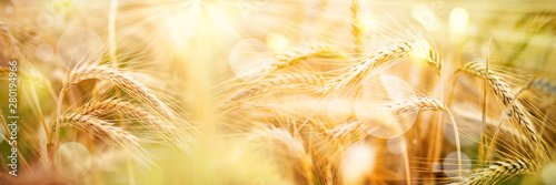 Golden wheat ears with sunbeams and bokeh