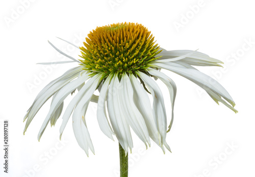 Obraz na plátně  Sonnenhut / Echinacea als Freiteller