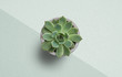 succulent plant on paper background