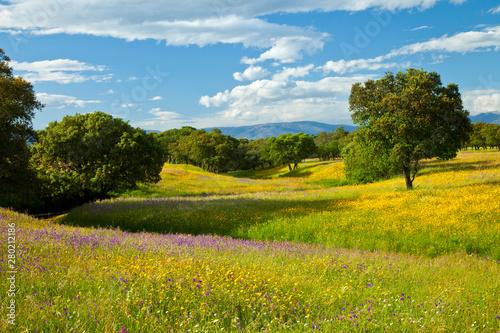 Dehesa de Encinas en primavera, Parque Nacional de Monfragüe, Cáceres, Extremadura, España