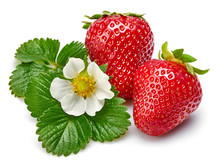 Strawberries With Green Leaf And Flowers, Isolated On White Background.