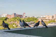Pigeons Sitting On Balcony Building