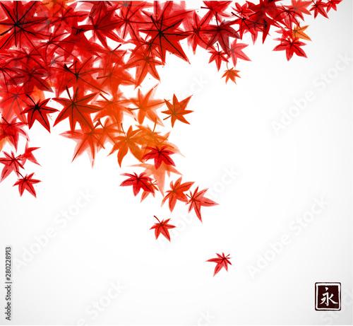 Fototapeta  Red leaves of japanese maple in fall