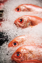 Red Snapper Fish At A Fish Mar...