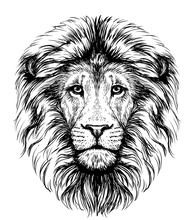 Lion. Sketchy, Graphical, Blac...