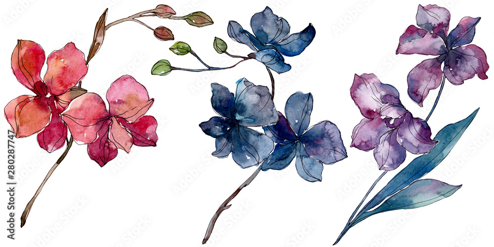 Fototapety, obrazy: Orchid floral botanical flowers. Watercolor background illustration set. Isolated orchids illustration element.