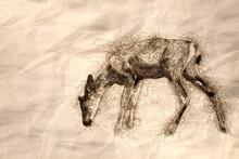 Sketch Of A Young Buck Deer Walking Across The Open Field