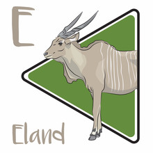 E For Eland, An Animal From Africa