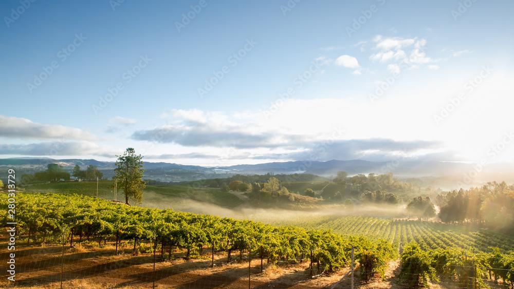 Fototapeta Sunrise Mist over California Vineyard Landscape