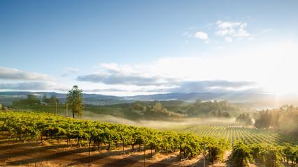 Magla izlaska sunca iznad pejzaža vinograda u Kaliforniji