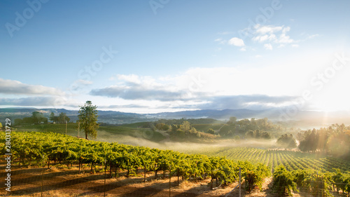 Tuinposter Wijngaard Sunrise Mist over California Vineyard Landscape