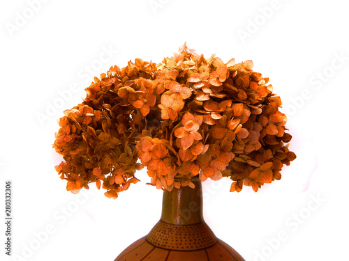 dry flower isolated on white background Wallpaper Mural