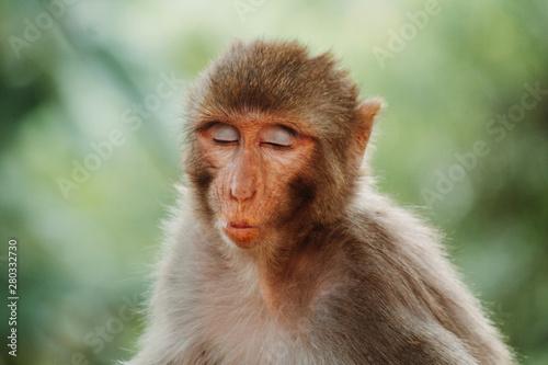 Foto op Aluminium Aap Portrait of a monkey making funny face