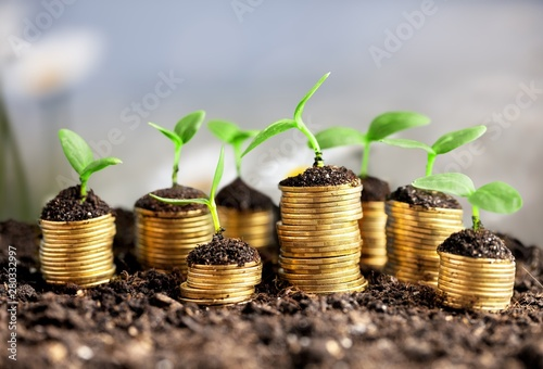 Foto auf AluDibond Indien Coins in soil with young plants on background