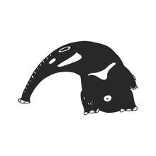 Anteater On White Background Illustration