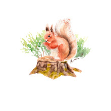 Watercolor Forest Set: Squirrel On A Stump